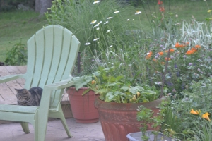 Sarge is content to wile her time away on the patio of her new home.